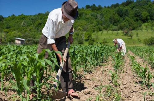 Quem tem direito a pedir auxílio doença rural?