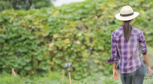 Como funciona a pensão por morte rural